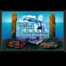 svobodniy-delfin